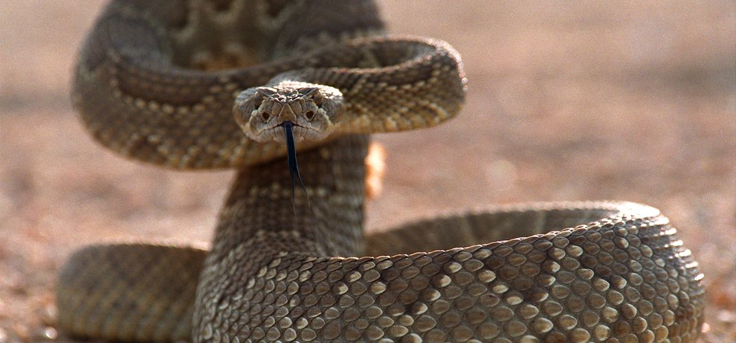 Caption: 14 Fun Facts About Frightening Animals