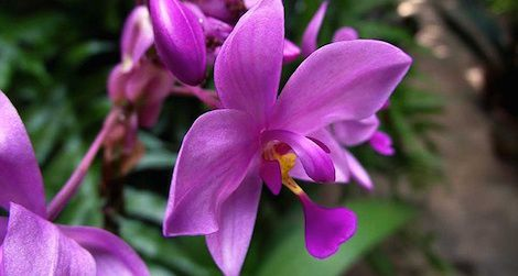 Orchids of Latin America Family Day