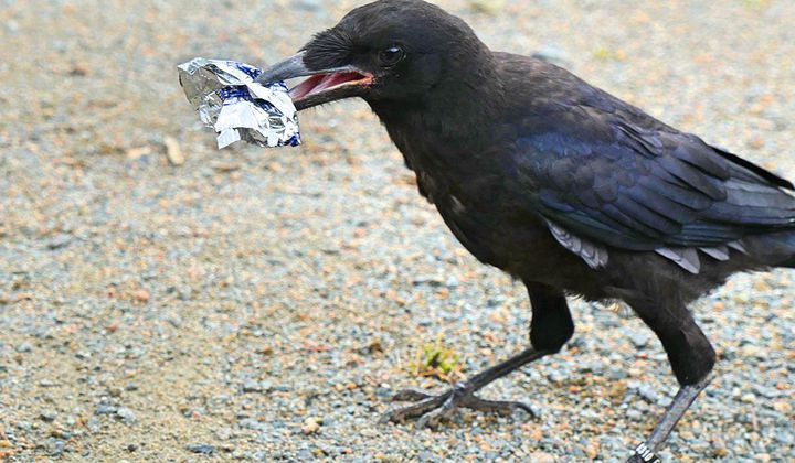 A French Theme Park Taught Crows To Pick Up Trash