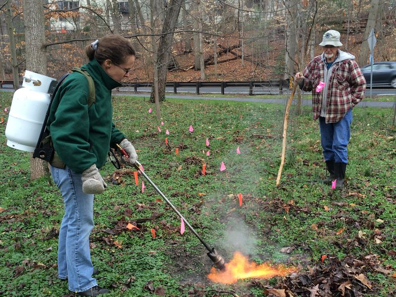 A New Weapon In The War On Weeds Flamethrowers Science