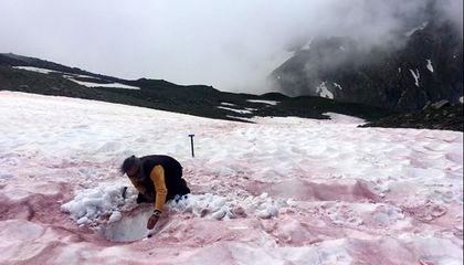 What 'Glacier Blood' on the French Alps Tells Scientists About Climate Change at High Elevations