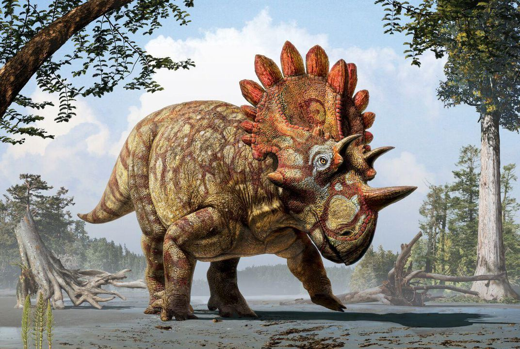 The 'Hellboy' Dinosaur, a New Cousin of Triceratops, Is Fossil Royalty |  Science | Smithsonian Magazine