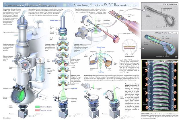 Compare the Transmission Electron Microscope