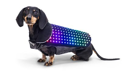 A LED Vest for Puppies and Other Wild Ideas That Just Got Funded