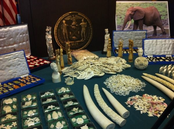 A cache of illegal ivory goods confiscated New York City last year were worth an estimated $2 million.
