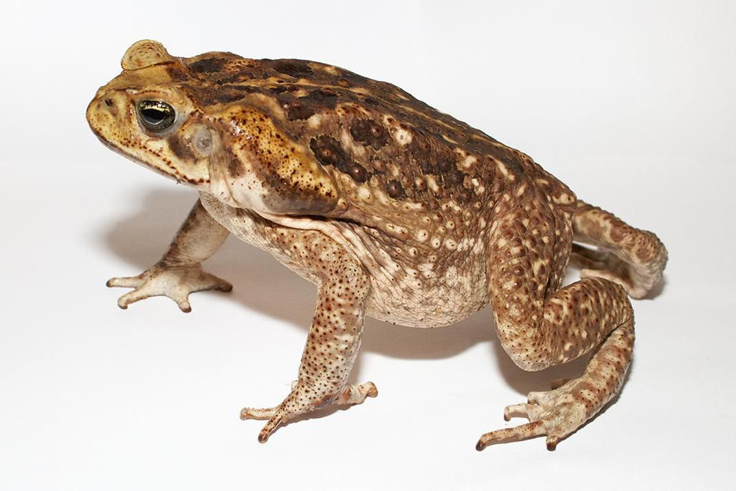 Here's Why You Should Never Kiss a Toad | At the ...