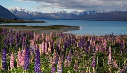 tailor-made-travel-new-zealand