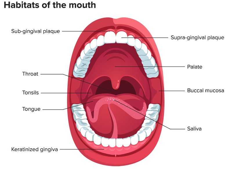 Mouth Diagram