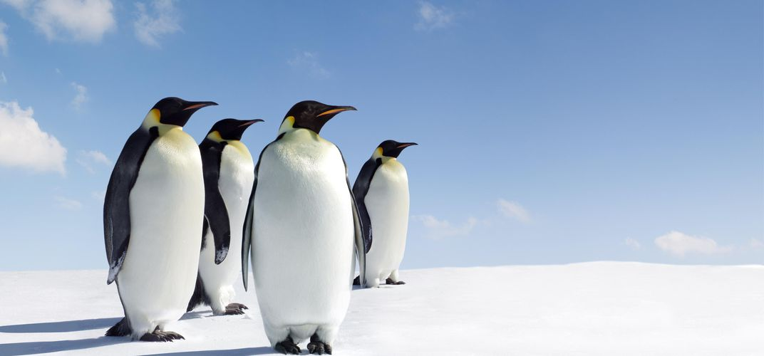 Caption: The Complicated Calculus of Counting Penguins
