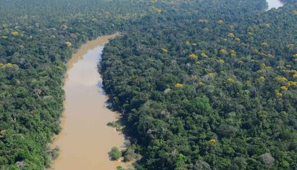 In a Remote Amazon Region, Study Shows Indigenous Peoples Have Practiced Forest Conservation for Millennia