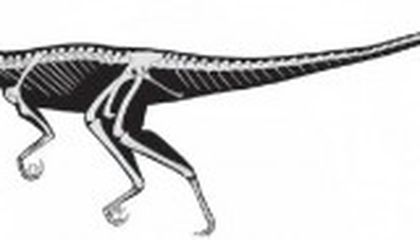 Tawa hallae and the Making of Meat-Eating Dinosaurs