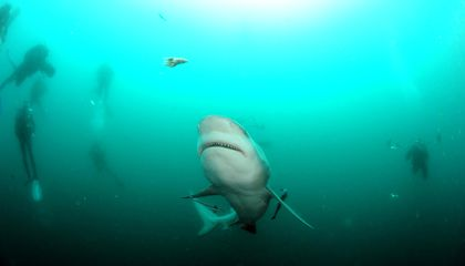 Why Is This Indian Ocean Island a Hot Spot for Shark Attacks?