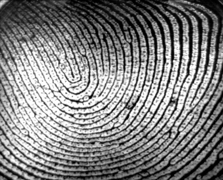 What Fingerprints Can Reveal About Ancestry | Smart News | Smithsonian