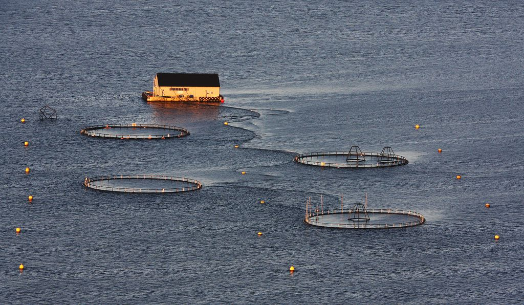 A fish farm in Norway.