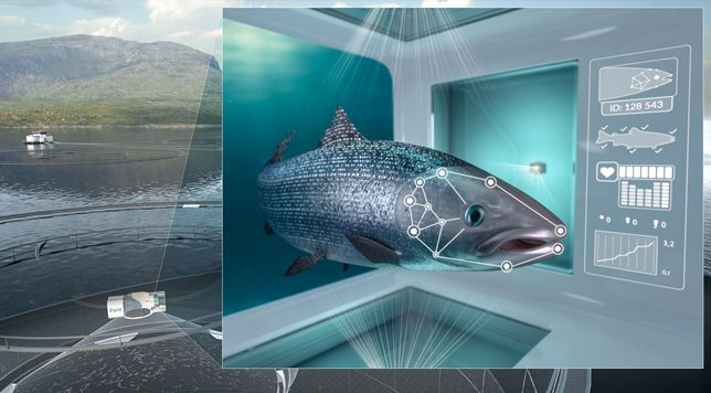 How Fish Farms Can Use Facial Recognition to Survey Sick Salmon | Smart News | Smithsonian