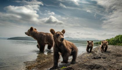 This Photographer Goes to the Ends of the Earth to Capture Rarely Viewed Animals