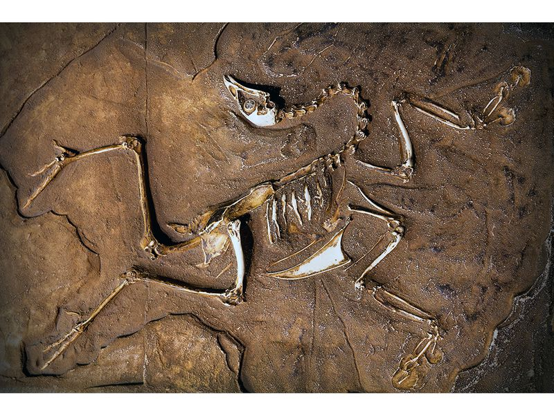 What Makes a Dinosaur a Dinosaur? | Science | Smithsonian