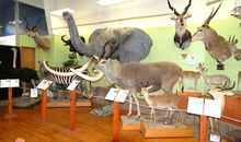 Buena Vista Museum of Natural History and Science