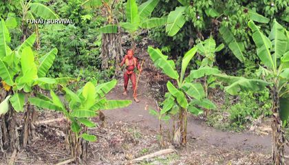 "Brazil Investigates Alleged Murders of ""Uncontacted"" Amazon Tribe Members"