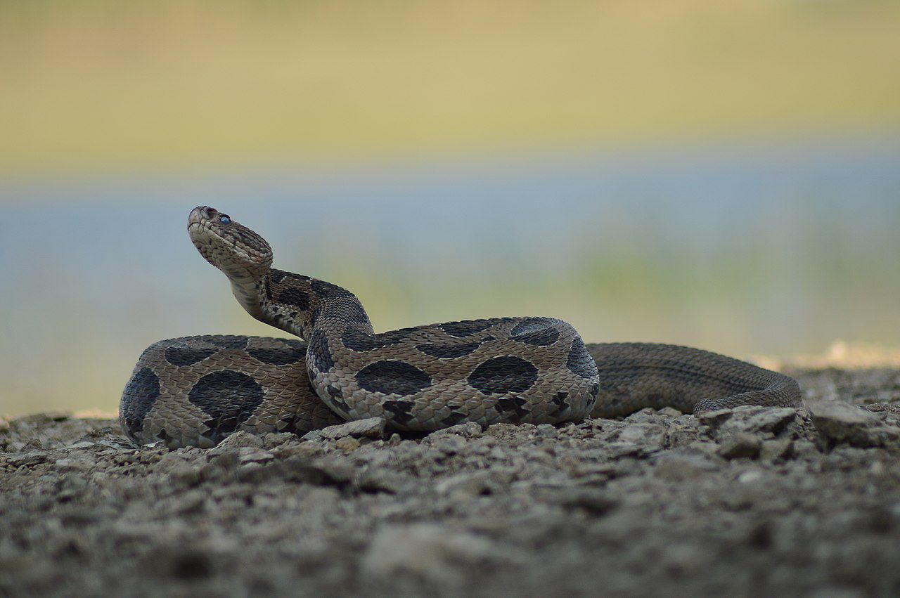This App Is Saving Thousands of Snakes (and Humans) in India