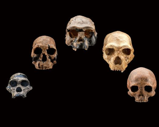 the human family's earliest ancestors | science | smithsonian, Skeleton