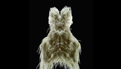 Iris Van Herpen Is Revolutionizing the Look and Tech of Fashion