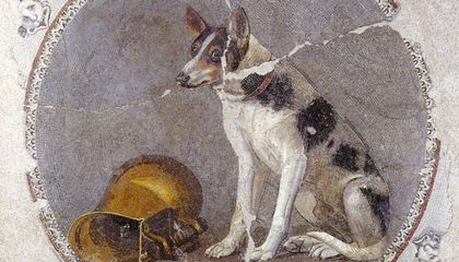 How Dogs and Humans Evolved and Migrated in Tandem