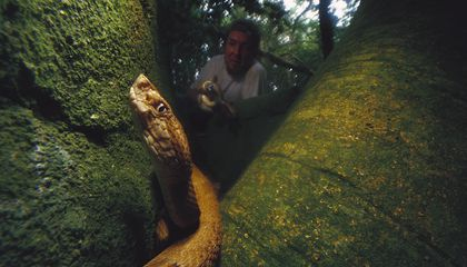 This Terrifying Brazilian Island Has the Highest Concentration of Venomous Snakes Anywhere in the World