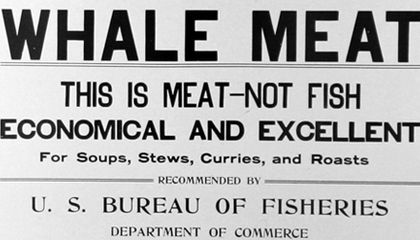 Saving the Whales (And Eating Them Too?)