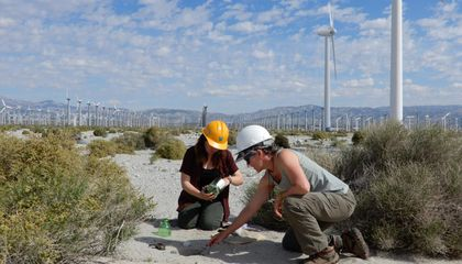Dogs Sniff Out Answers to Bat and Bird Fatalities Near Wind Turbines