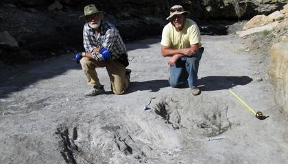 Dinosaurs May Have Dug Trenches to Woo Mates