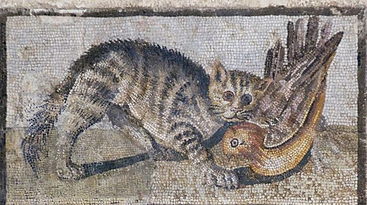 A Brief History of House Cats | History | Smithsonian