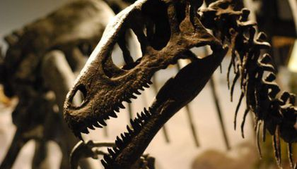What Do We Really Know About Utahraptor?