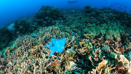 Billions of Pieces of Plastic Spread Disease in Coral Reefs