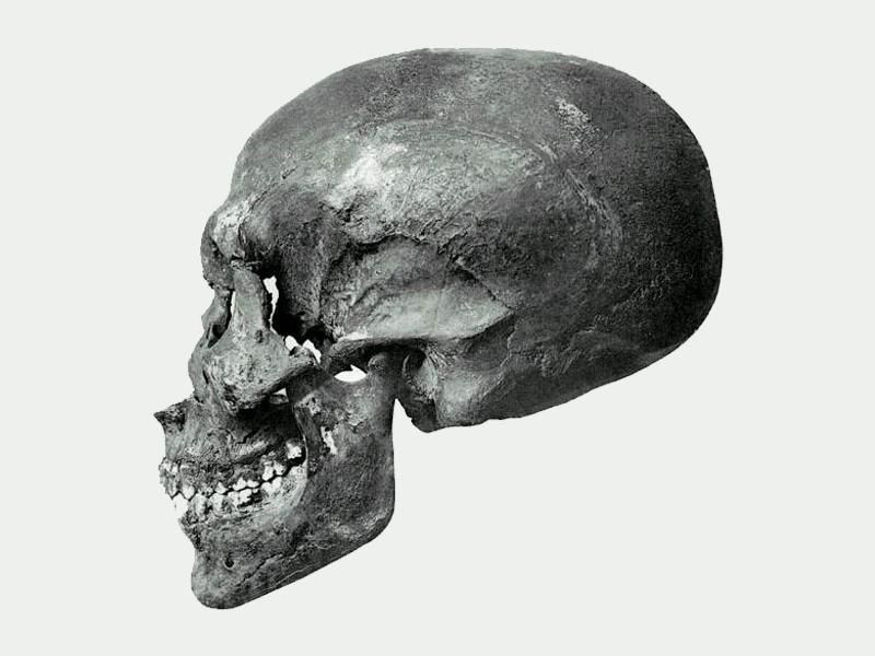 Profile view of KV55's skull