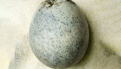 Archaeologists Crack the Case of 1,700-Year-Old Roman Eggs