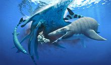 Newly Discovered Marine Reptile Sawed Prey With Serrated Teeth