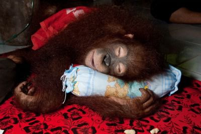 20110520110727orang-baby-pillow-small.jpg