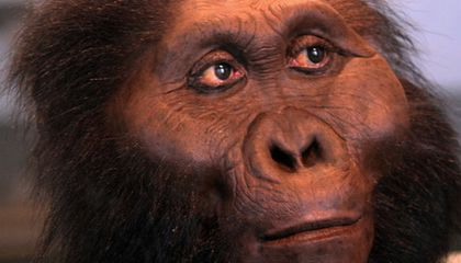 The Top Seven Human Evolution Discoveries From Tanzania