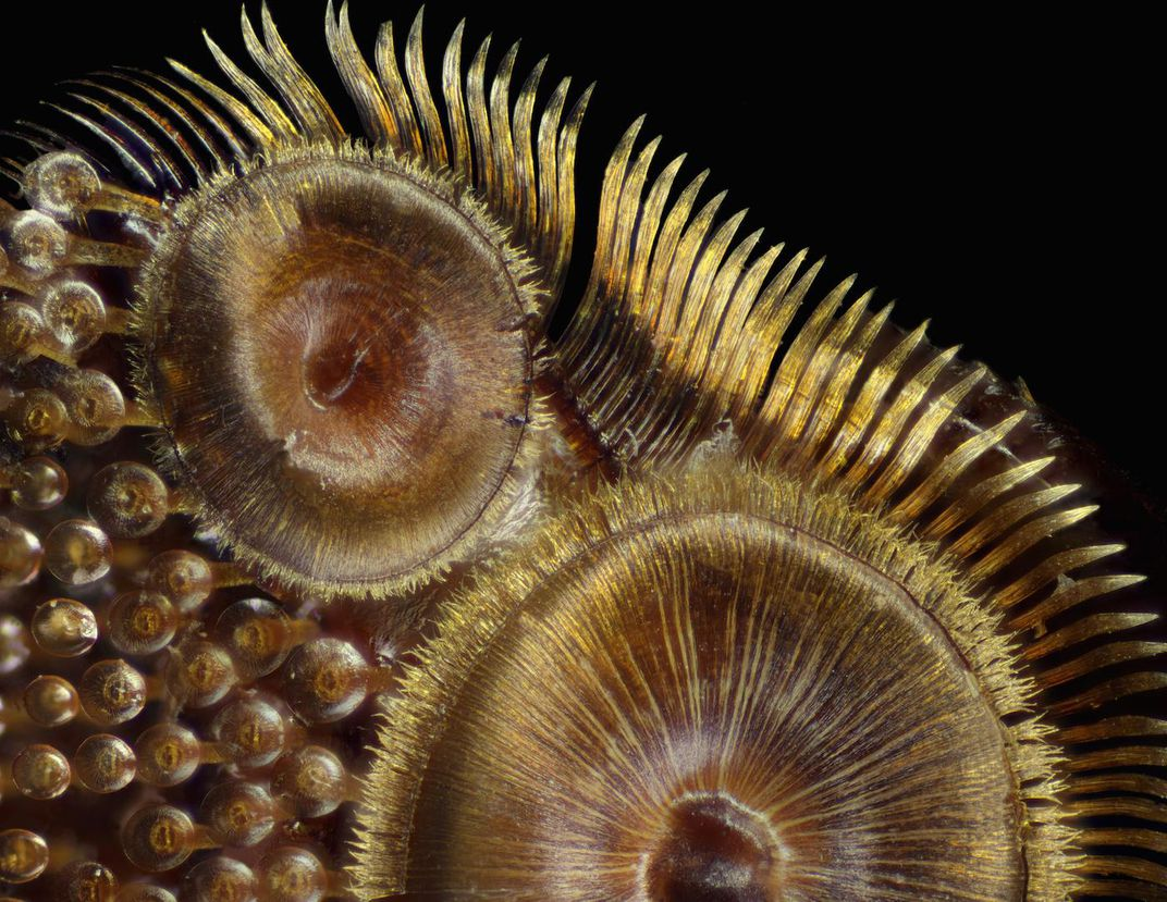 See At A Bees Eye Level With 9 Award Winning Microscopic Photos