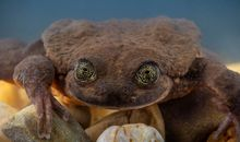 A Year Later, Match.com Profile Pays Off for World's Loneliest Frog
