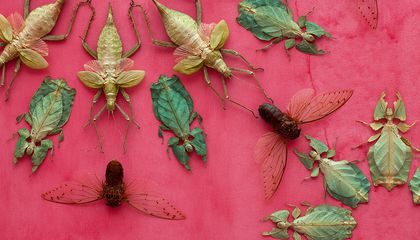 How Thousands of Dead Bugs Become a Mesmerizing Work of Extraordinary Beauty