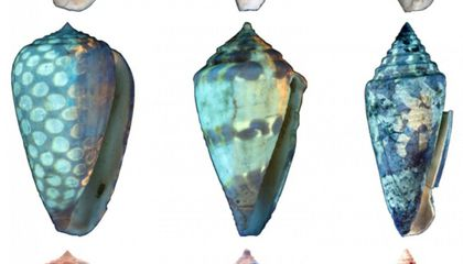 UV Light Reveals the Colors of Fossil Shells