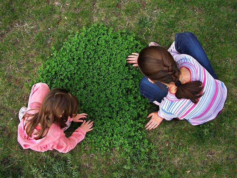 How to Find a Four-Leaf Clover