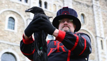 Tower of London Reveals Newest Raven's Mythical Name