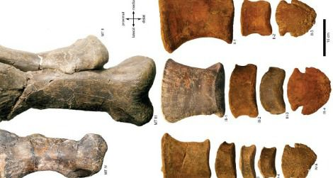 Bones from the foot of a hadrosaur attributed to Edmontosaurus annectens