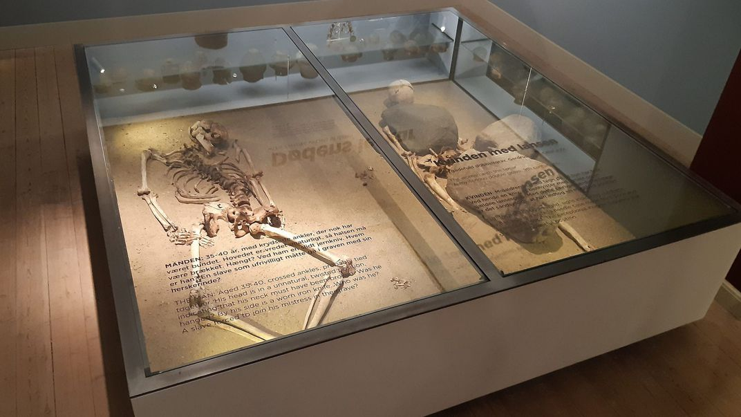 Skeletons on display at Roskilde Museum