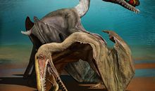 Pterosaurs May Have Flown as Soon as They Hatched