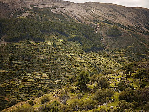 Inca Agriculture And Farming
