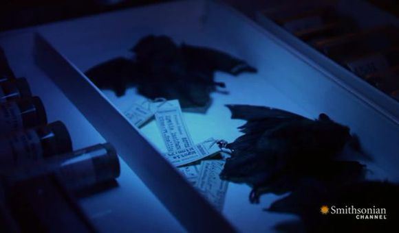 Preview thumbnail for video'The Largest Bat Collection in the World